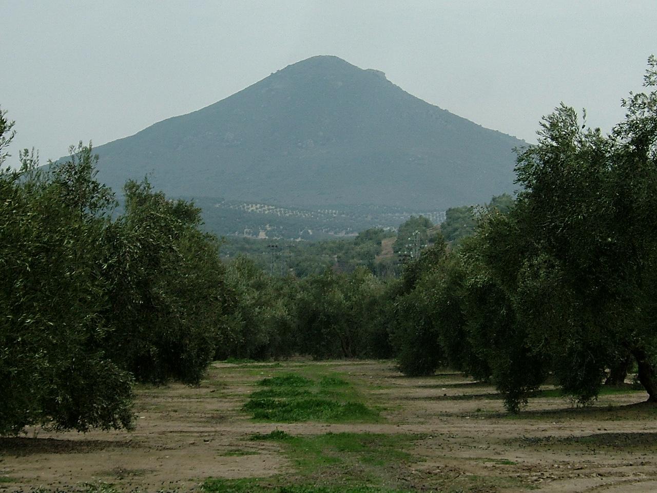 CAPIRETE - Huile d'Olive Vierge Extra 4
