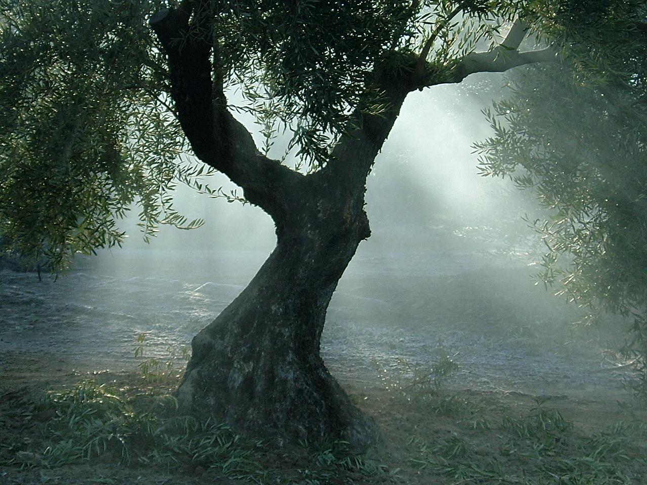 CAPIRETE - Huile d'Olive Vierge Extra